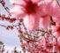 Il_commosso_addio_a_Marta_Chio_piacenza_2460.jpg