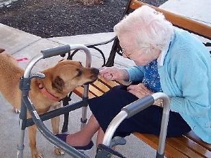 Il-cane-puogra10426-piacenza.jpg
