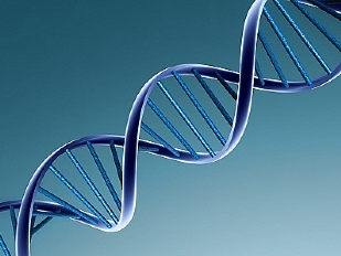 DNA-orgoglio-i12958-piacenza.jpg
