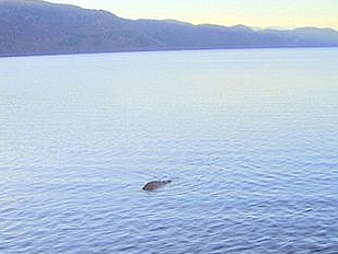 Loch-Ness-emer14869-piacenza.jpg
