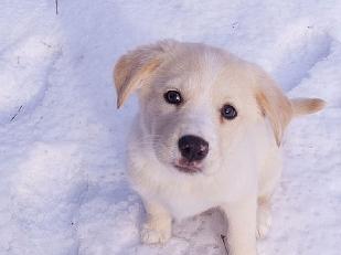 Cuccioli-di-can16054-piacenza.jpg