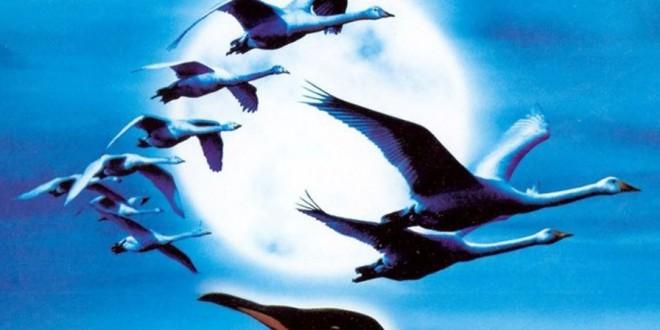 """Poster del film """"Il popolo migratore"""""""