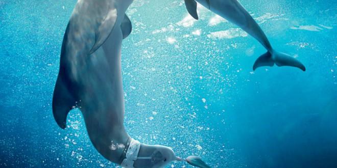 """Poster del film """"L'incredibile storia di Winter il delfino 2"""""""