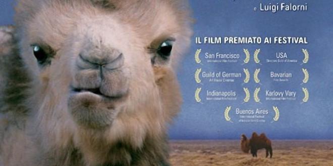 """Poster del film """"La storia del cammello che piange"""""""