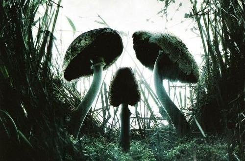 """Poster del film """"Shrooms - Trip senza ritorno"""""""