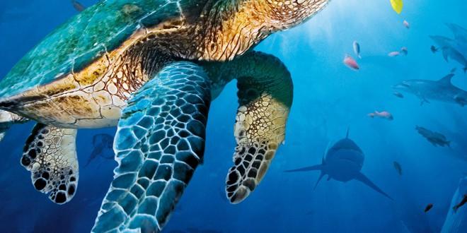 """Poster del film """"Oceani 3D"""""""