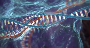 È pronta la prima mappa del Dna in 3D