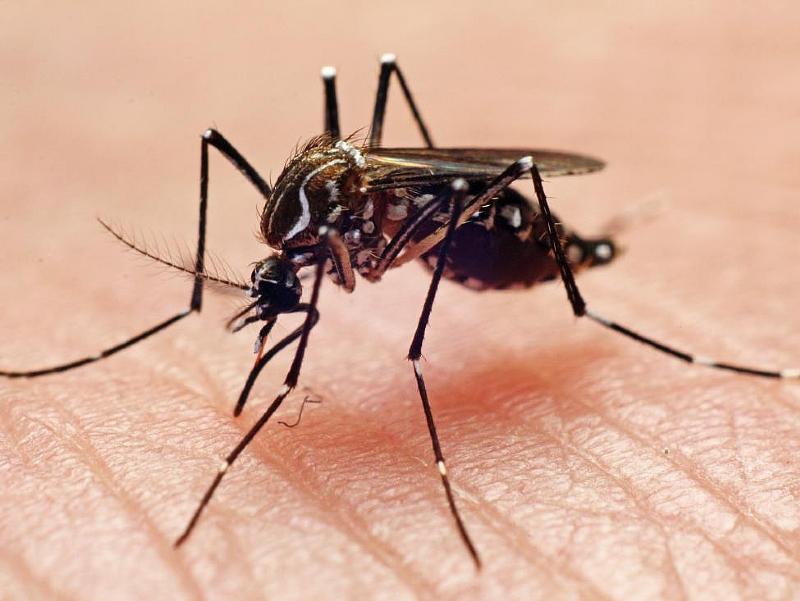 Virus-Zika-Sta17177-piacenza.jpg