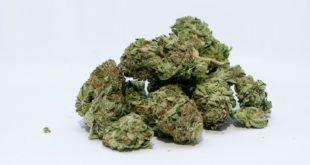 Sul Facsal con 16 dosi di marijuana in tasca. Arrestato 27enne nigeriano