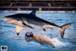 Michael Phelps vs lo squalo bianco