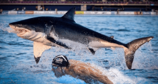 Michael Phelps vs lo squalo bianco su Discovery Channel