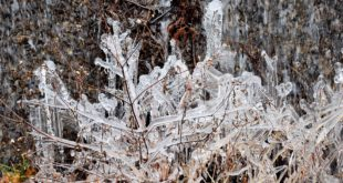 Neve nel piacentino. Alberi caduti sulla carreggiata a causa del gelicidio