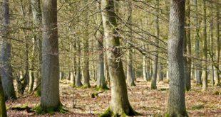 Ritrovato privo di vita il 60enne scomparso nei boschi di Ottone