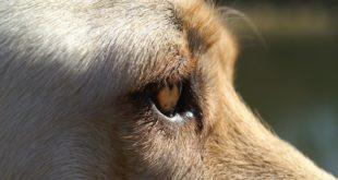 Blitz a scuola con cani antidroga. Sequestrati 7 grammi di marijuana