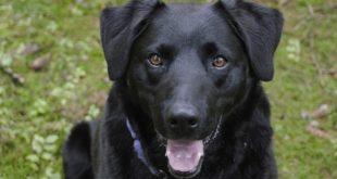 Cane messo in salvo da Enpa: rinchiuso per mesi in un garage, in mezzo alla sporcizia