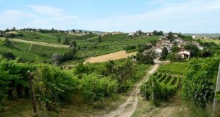 Valtidone Wine Fest, a settembre la decima edizione della rassegna del vino piacentino