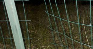 Metronotte. Scoperta intrusione in una ditta di Cortemaggiore, rete tagliata e gettata in un pozzetto