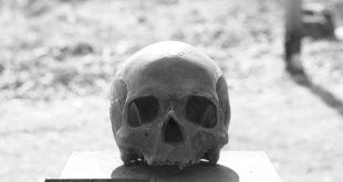 Potrebbe essere di Plinio il Vecchio il cranio conservato all'Accademia di Arte Sanitaria di Roma
