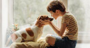 Piacenza adotta un regolamento per la tutela degli animali da compagnia